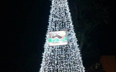 La Pedagnalonga ha donato l'albero di Natale alla comunità di Borgo Hermada