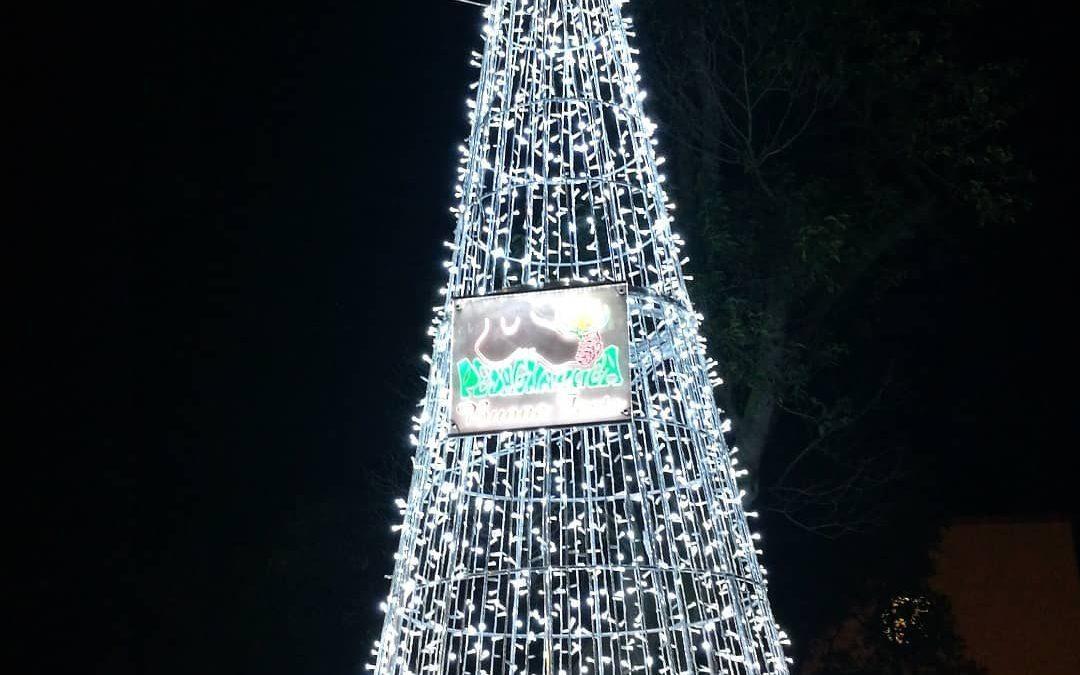 Comunicato stampa, domani (alle 18) la Pedagnalonga accende l'albero di Natale donato a Borgo Hermada, evento trasmesso in streaming per evitare assembramenti.. Sicignano: «In questo momento difficile vogliamo regalare un sorriso e un po' di luce alla comunità»